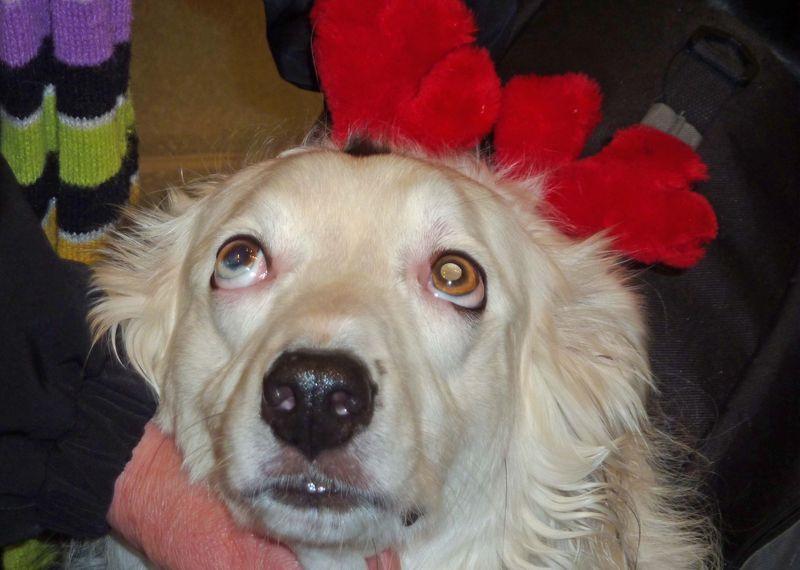 Christmas dog3